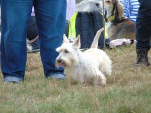Dog Show 2014 - 2